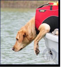 Hund bei der Wasserortung